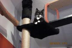 Katzen-Klettersysteme